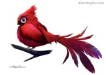 Cardinal -Male